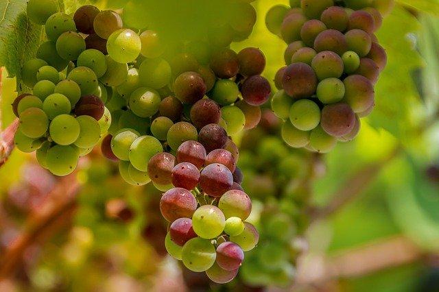 vinification du vin rouge